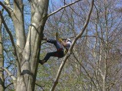 Baumfäller