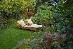 Garten mit Sträuchern