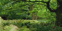 Grünflächen-Konzepte