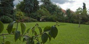 Grünflächen Management