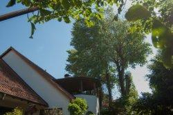 Mobilkran Baumfällung