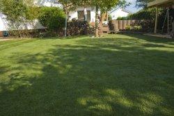 Rasenfläche 2
