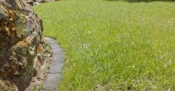 Rasenfläche 3