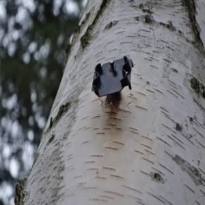 Baumnummer-fehlt-300x300