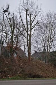 Verstümmelung am Baum