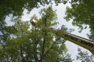 Baumarbeiten mit der Arbeitsbühne